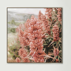 Pink Scoparia (Square) Canvas Print