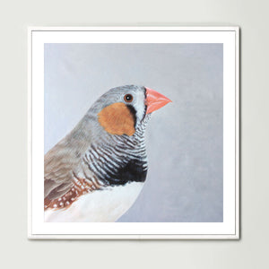 Finch (Square) Art Print