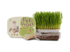 PET GRASS Growing Kit