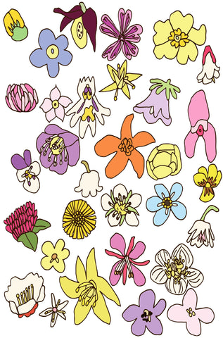 Norwegian Flowers