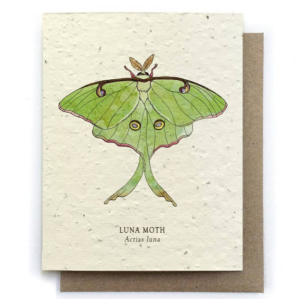Luna Moth Insect Greeting Cards - Plantable Seed Paper