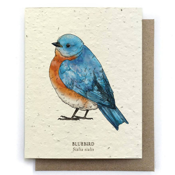 Bluebird Bird Greeting Cards - Plantable Seed Paper