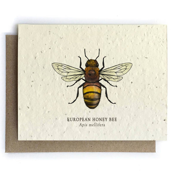 Honey Bee Greeting Cards-Plantable Seed Paper