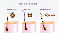 shape of hair follicles
