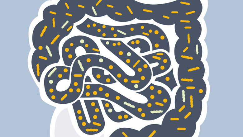 The gut and our microbiome Symprove