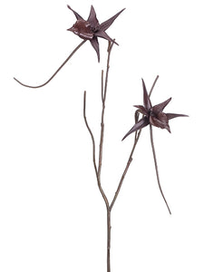 "25"" Spider Orchid Branch  Brown (pack of 6)"