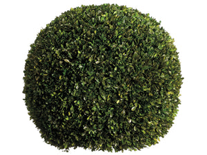 "23"" Preserved Boxwood Ball  Green (pack of 1)"