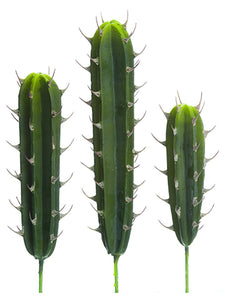 "12.5""-17.5"" Soft Peruvian Cactus (3 Assoted/set) Green (pack of 12)"