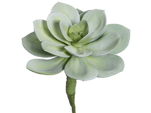 "12""Hx9.5""D Soft Echeveria Pick Green Gray (pack of 8)"