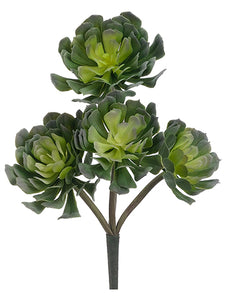 "12.5"" Echeveria Spray x4  Green (pack of 12)"