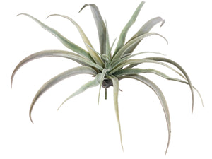 "9"" Tillandsia  Green (pack of 24)"
