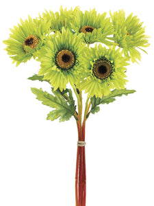 "12"" African Daisy Bundle x6  Green (pack of 12)"