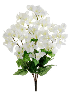 "24"" Bougainvillea Bush X 7  Cream White (pack of 12)"
