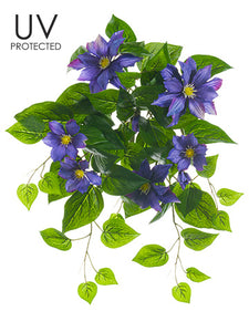 "20.5"" UV Protected Clematis Bush Purple (pack of 6)"