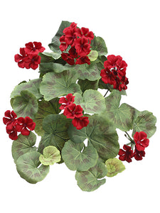 "24"" Geranium Hanging Bush  Red (pack of 6)"