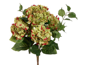 "22"" Hydrangea Bush x5  Green Beauty (pack of 6)"