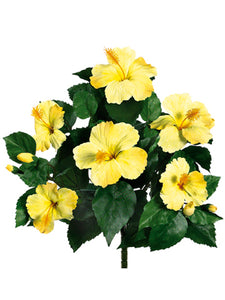 "15"" Hibiscus Bush x6  Yellow (pack of 12)"