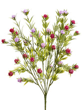 Load image into Gallery viewer, Lavender Rubrum