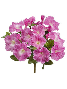 "10.5"" Petunia Bush  Beauty (pack of 12)"