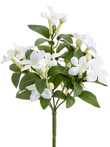"10"" Stephanotis Bush x5  White (pack of 12)"