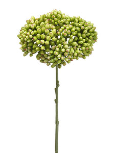 "12.5"" Sedum Spray  Green (pack of 12)"
