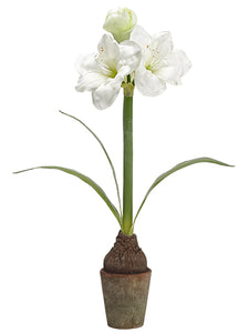 "25"" Amaryllis With Bulb in Terra Cotta Pot White Green (pack of 4)"