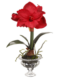 "17"" Amaryllis in Glass Vase With Moss Red (pack of 6)"