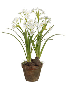 "19"" Daffodil With Bulb in Terra Cotta Pot White (pack of 4)"