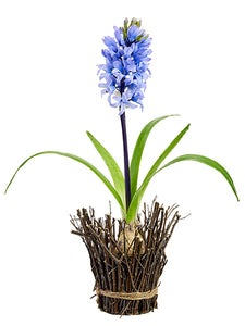 "17"" Hyacinth With Bulb in Twig Container Lavender (pack of 6)"