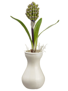 "12"" Hyacinth Bud in Vase  Lavender (pack of 6)"