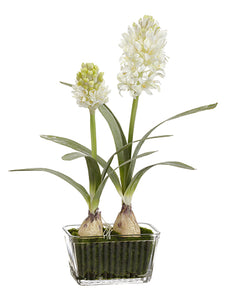 "16.5"" Hyacinth in Glass Vase  White (pack of 6)"