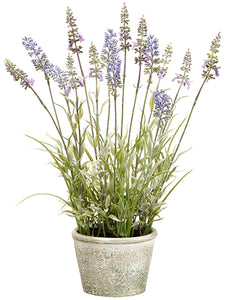 "15.5"" Lavender in Paper Mache Pot Lavender (pack of 6)"