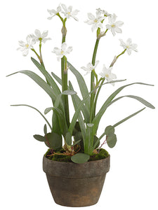 "25"" Narcissus in Terra Cotta Pot White (pack of 4)"