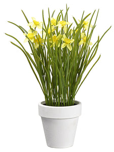 "11.5"" Narcissus in Paper Mache Pot Yellow (pack of 6)"