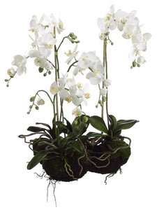 "33"" Phalaenopsis Orchid Plant with Soil and Moss White (pack of 1)"