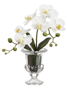 "14"" Phalaenopsis Orchid Plant in Glass Vase White (pack of 6)"