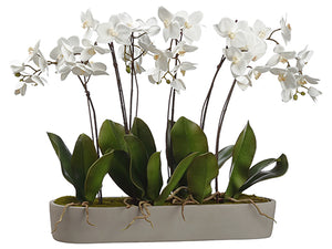 "27.5"" Phalaenopsis Orchid Plant in Cement Pot White (pack of 1)"