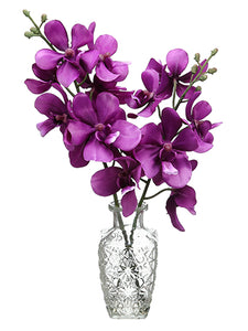 "14.9"" Orchid in Glass Vase  Violet Orchid (pack of 6)"
