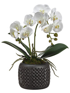 "18"" Phalaenopsis Orchid x2 in Tin Pot Cream White (pack of 6)"