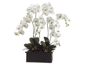"42"" Phalaenopsis Orchid Plant in Terra Cotta Pot White Green (pack of 1)"