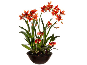 "28"" Oncidium/Lady's Slipper Orchid in Terra Cotta Bowl Rust Green (pack of 1)"