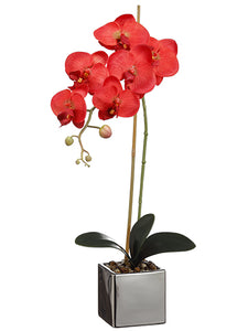 "23"" Phalaenopsis Orchid Spray With 3 Flowers And 1 Bud in Pot Red (pack of 6)"