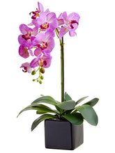Load image into Gallery viewer, Orchid