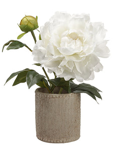 "11"" Peony in Cement Container  White (pack of 1)"