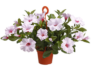 "12"" Petunia in Hanging Basket  Soft Pink (pack of 6)"