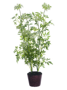"40.5"" Queen Anne's Lace Plant With Soil White (pack of 1)"