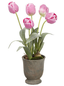 "20"" Tulip in Cement Urn  Pink (pack of 4)"