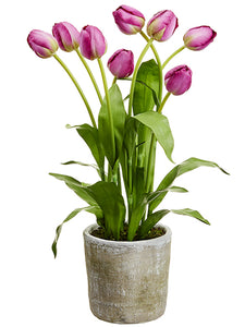 "28"" Tulip in Mgo Pot  Boysenberry (pack of 1)"