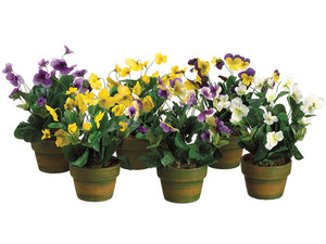 "10"" Viola in Terra Cotta Pot Assortment (2 ea/ 4 colors & 4 ea /color) Assorted (pack of 12)"
