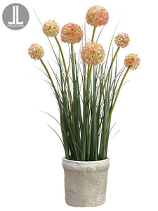 "27"" Allium in Clay Pot  Mauve Green (pack of 4)"